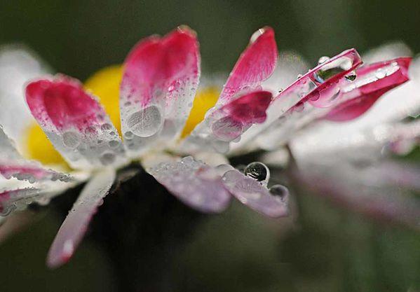 Fleurs-11 4541 modifié-1