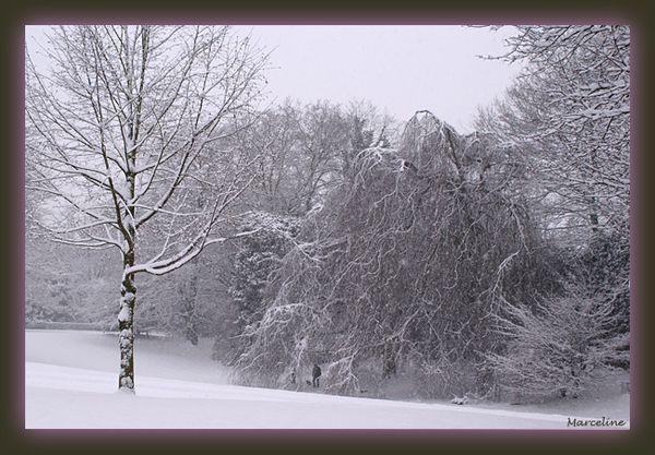 arbres sous la neige.jpg