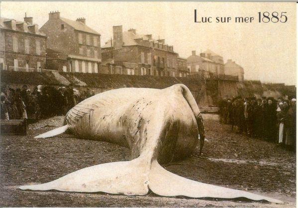 Baleine-Luc-1885.JPG