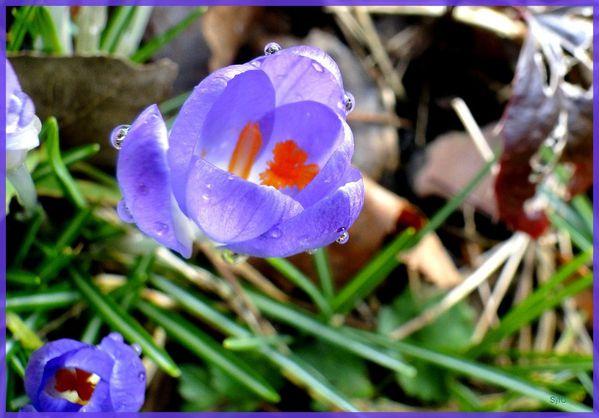 Prémices du printemps-13