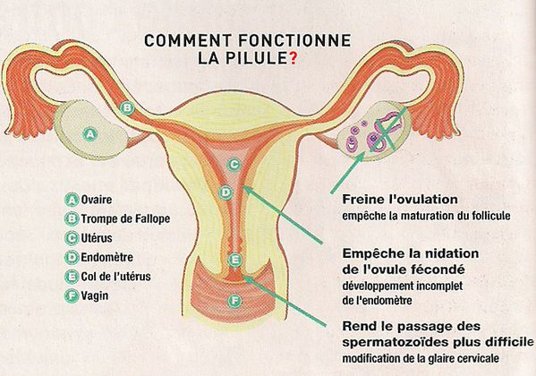 Classification des pilules contraceptives pharamster un regard officinal in - Comment fonctionne un thermocouple ...