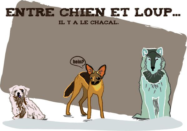 chienloup.jpg