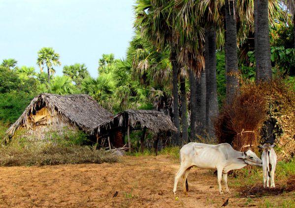 birmanie 1005