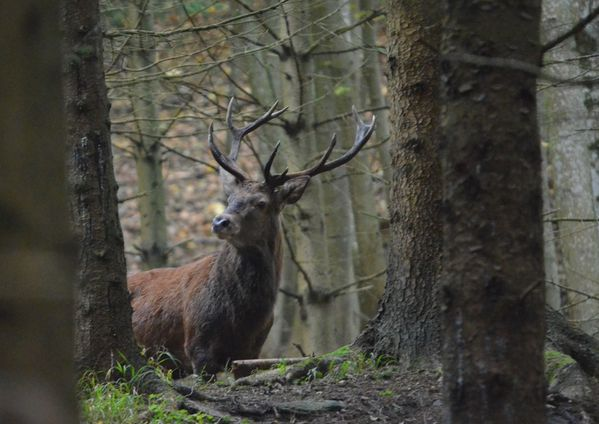 animaux-foret 0189a