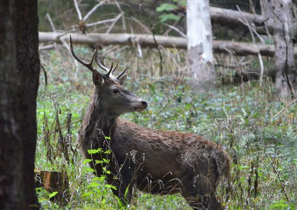 animaux-foret 0205a