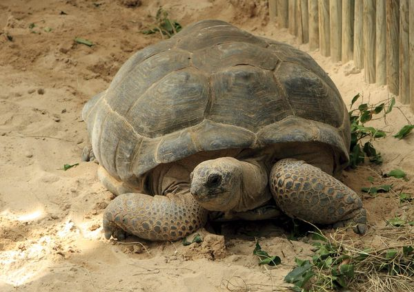 tortue-