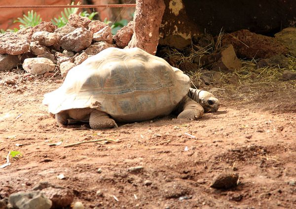 tortue-4