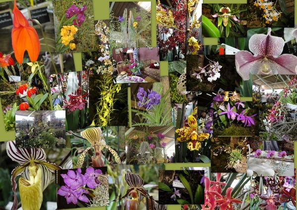 expo-orchids1.jpg