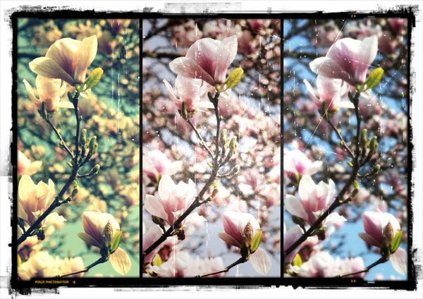 arbre--en-fleurs-printemps-2012.jpg