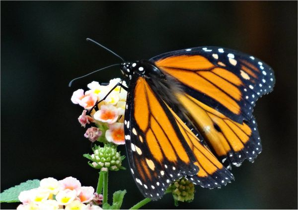 serre-aux-papillons-zoo-stuttgart.jpg