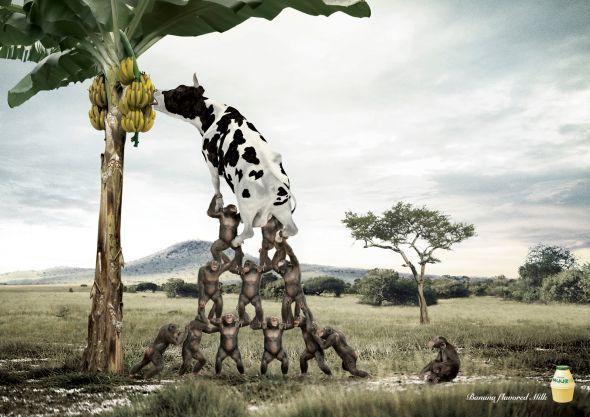 ad-banana-milk-grasslan