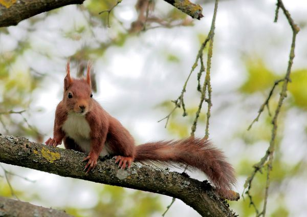 ecureuils 6651