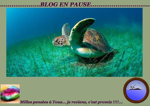 Image-4.png