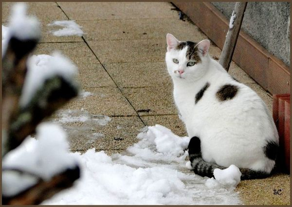 Chat neige-01