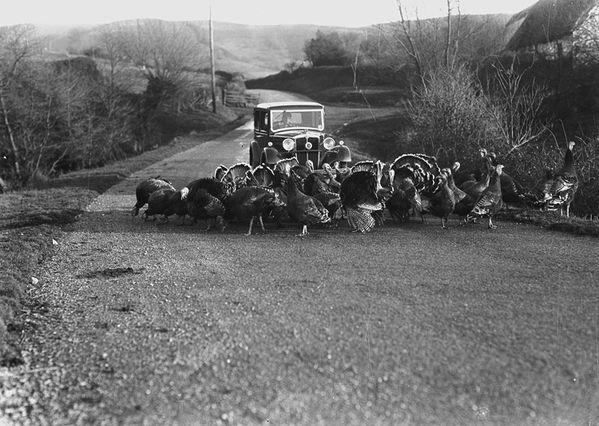 dindons USA-1948 domaine public