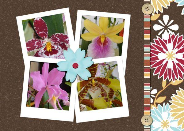photo montage orchidées