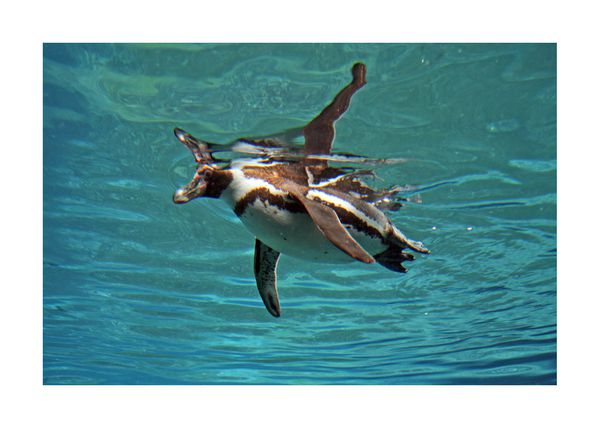 oiseaux-divers-10