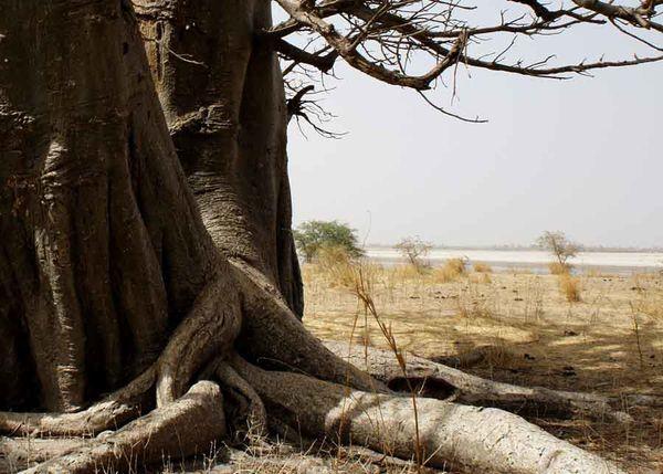 baobab-panorama.jpg