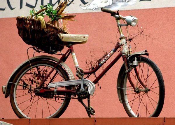 Kaiserstuhl 2006-10-27 012