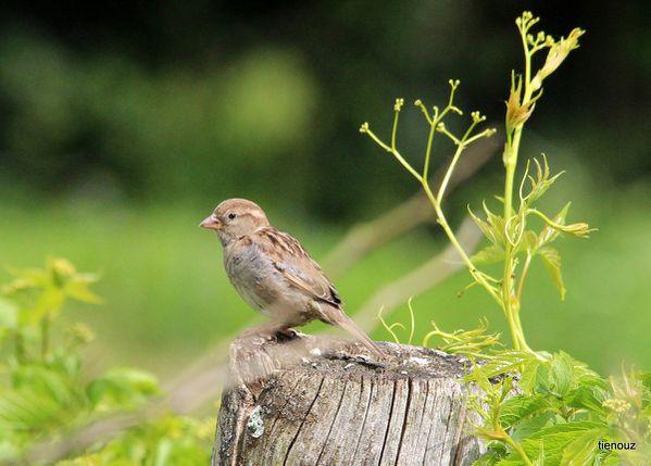 oiseaux 0513