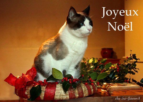 Noel-2012-copie.jpg