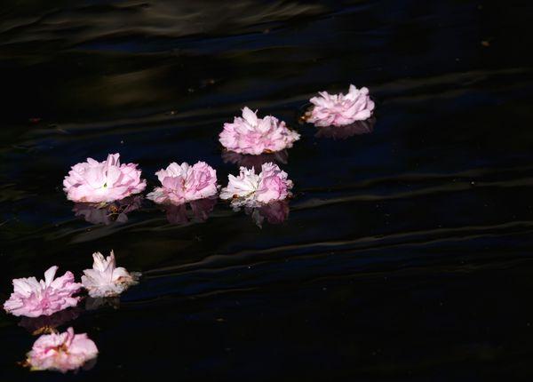 fleurs-a-l-eau1.jpg