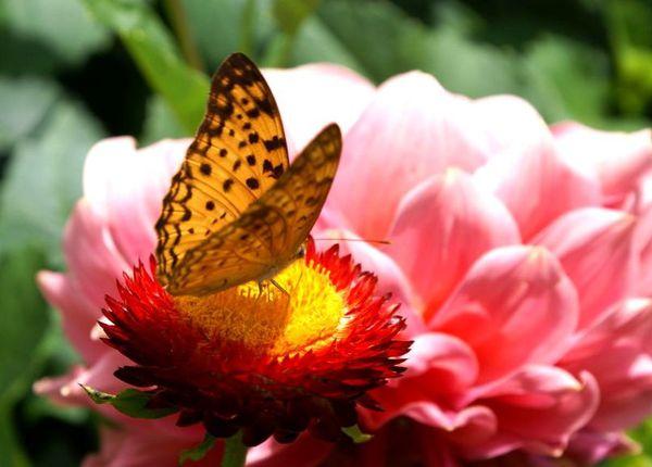 butterfly_lovecards-dsc08806.jpg