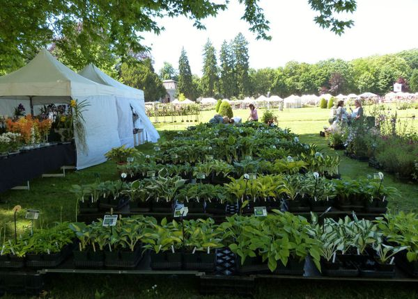 journees-de-la-rose-chaalis---juin-2014---stand-demoinet--.jpg