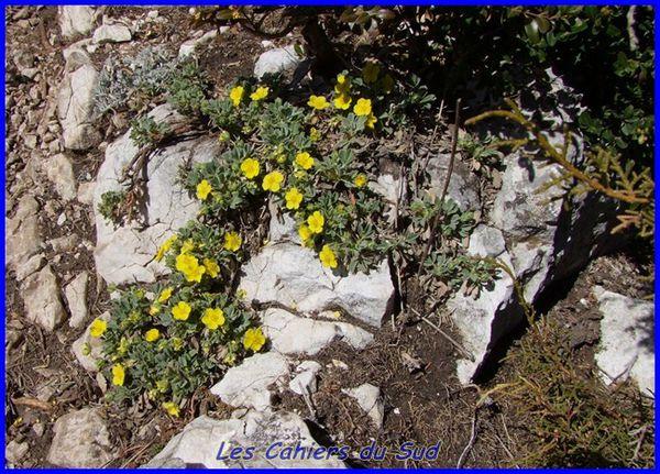 fleurs jaunes [640x480]