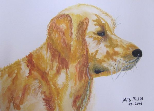 golden-retriever-Flocky.jpg
