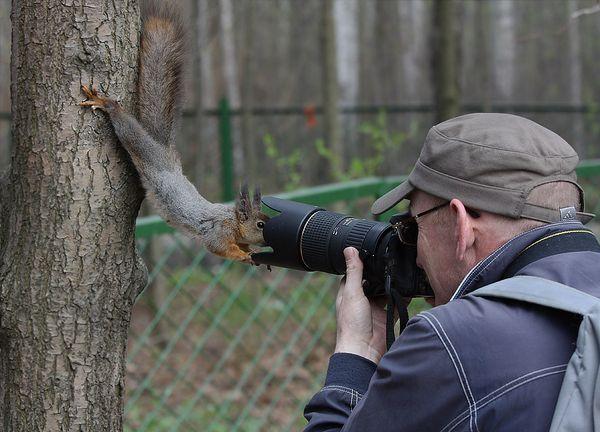 ecureuil-curieux-photo.jpg