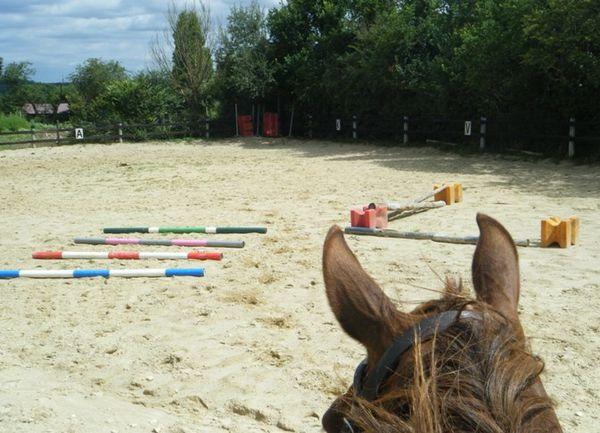 saut d'obstacles barres sol cheval équitation