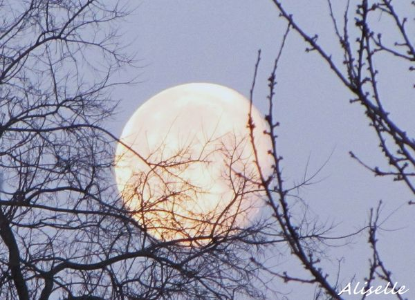 Lune se couchant 01 02 2010 #2