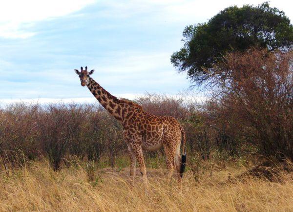 Maasai Mara 13