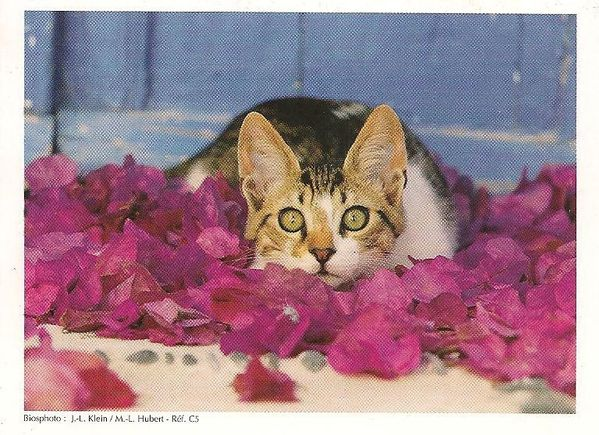 Calendrier-Petit-chat-2005-copie-1.jpg