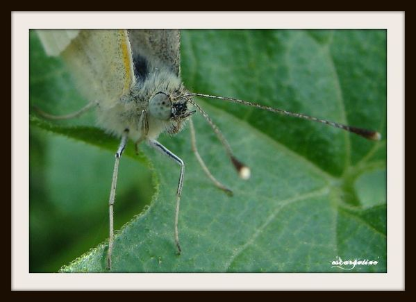 17/07/2010 insectes 043 1