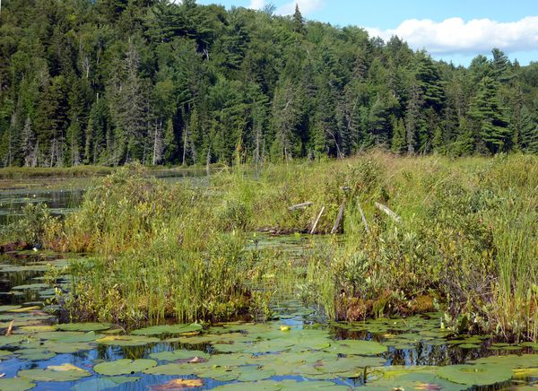 Mauricie-Lac-Loutre-2.jpg