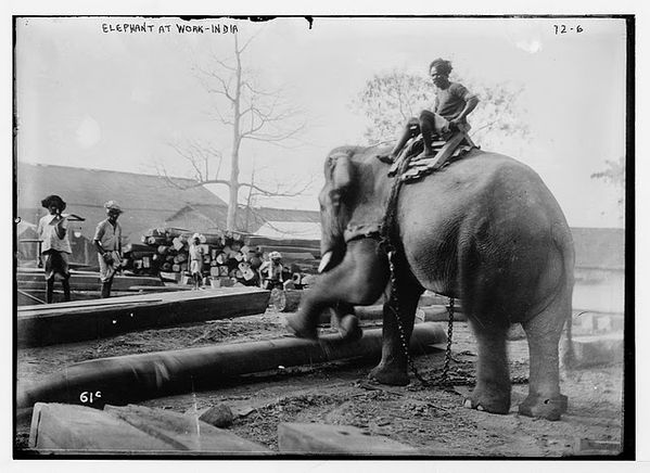 Elephant at Work - India 1920s