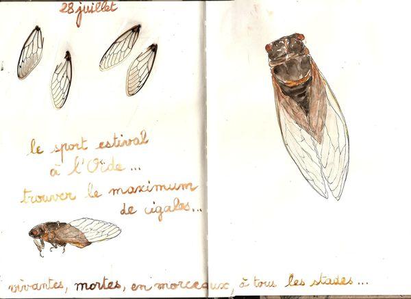cigales.jpg