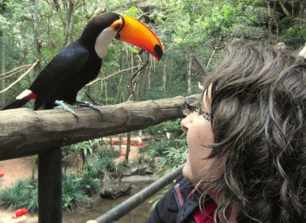 fannie toucan