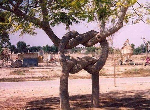 arbres 16