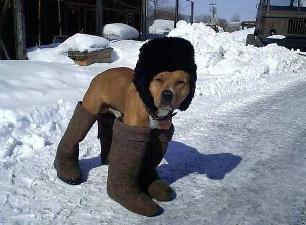 Pendant l'hiver  Image drôle  Insolite