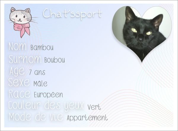 chatssport Bambou-copie-1