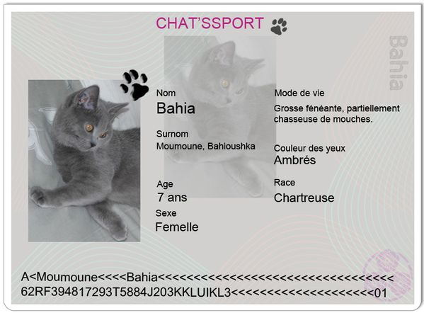 chatsport-Bahia.jpg