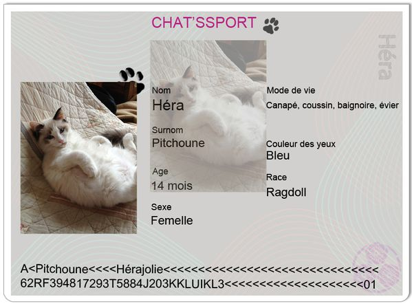 chatsport-Hera-copie-1.jpg