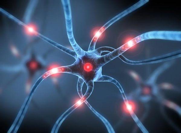 Insolite-nos-neurones-peuvent-vivre-deux-fois-plus-longtemp