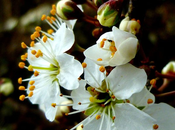 fleur d 39 aub pine penhars infos quimper. Black Bedroom Furniture Sets. Home Design Ideas