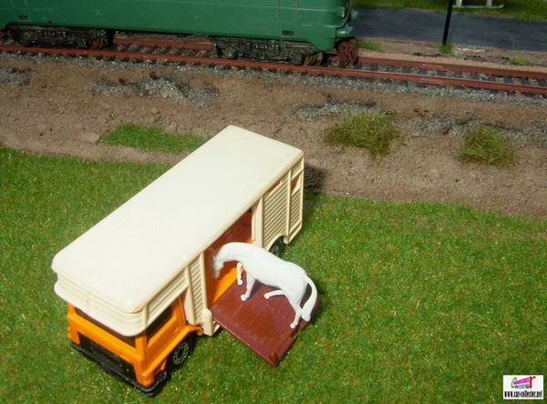 horse box camion betaillere avec son cheval blanc