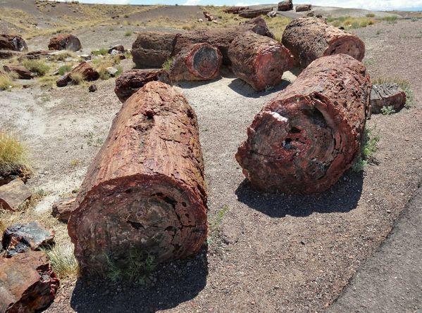 Petrified-Forest-logs-4.jpg