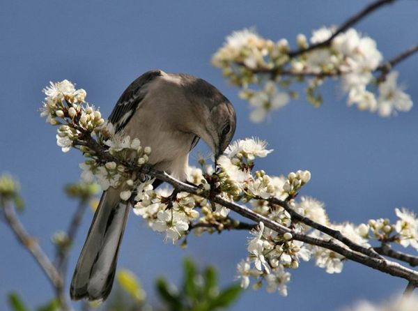 le-printemps---flore--5-.jpg